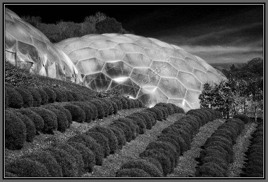 Black Bubble Wrap Bubble-wrap Sanctuary